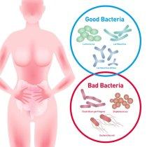 goodbacteria